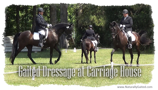 Gaited Dressage at Carriage House