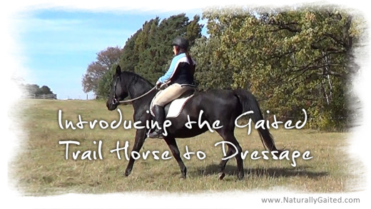 Introducing the Gaited Trail Horse to Dressage