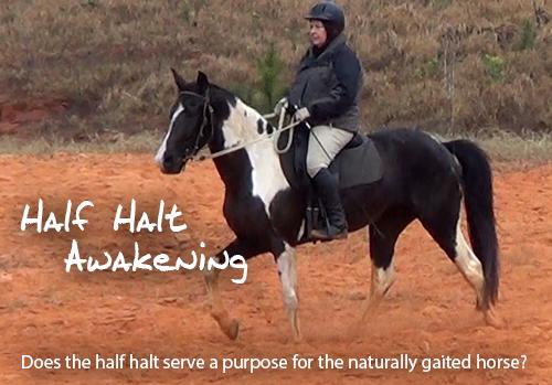 half halt awakening