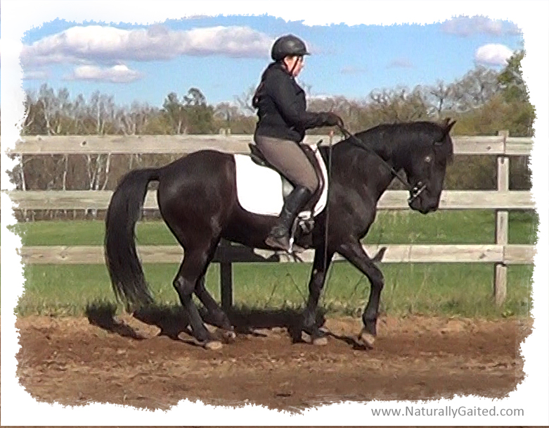 Upper level movements for the naturally gaited horse