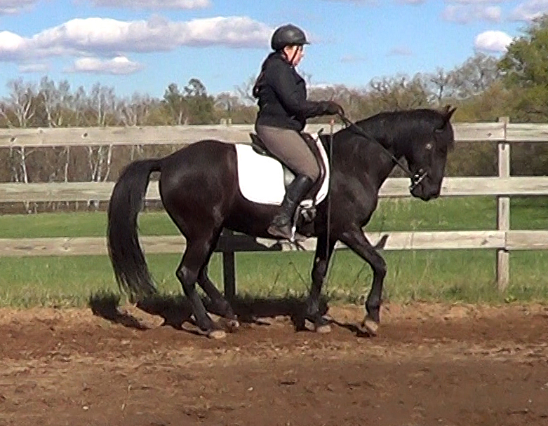 Upper Level Movements & the Naturally Gaited Horse