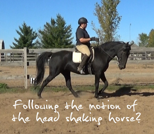 Following the motion of the head shaking horse
