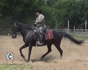 IJA Western Training 2 canter