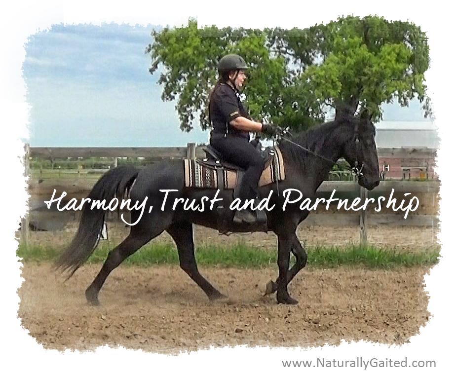 Harmony Trust and Partnership