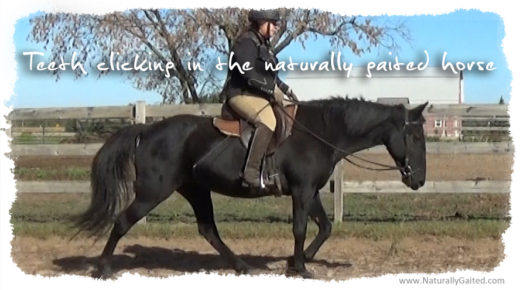 Teeth clicking and the Naturally Gaited Horse