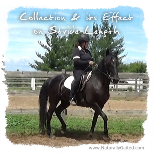 Collection and its effect on stride length