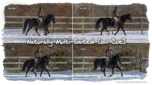 naturally multi-gaited on cue