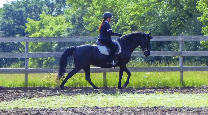 french dressage for gaited horses | Naturally Gaited